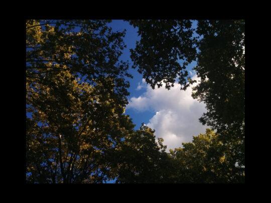 Photo d'arbre et de nuage