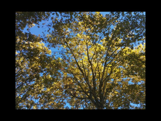 Photo de la lumière dans les arbres